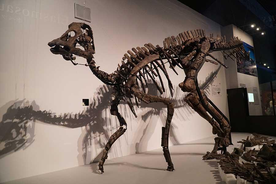 ド迫力「むかわ竜」東京上陸を撮った…北海道で発見された全長8メートルの大型恐竜