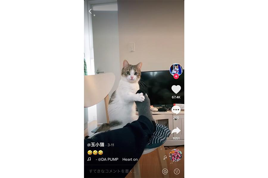 「つり革ダンスチャレンジ」の猫の動画の画像