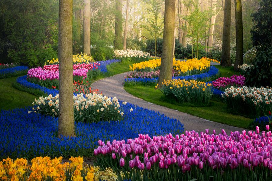 """コロナ禍のオランダでチューリップ満開! """"ヨーロッパの庭""""キューケンホフ公園見事"""