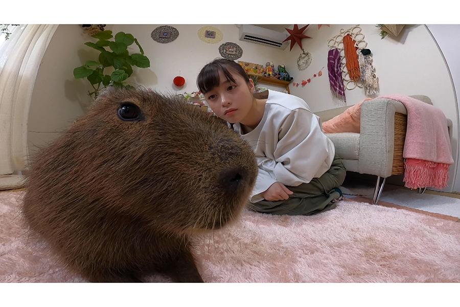 橋本環奈が「番組ファミリー」として出演決定【写真:(C)日本テレビ】