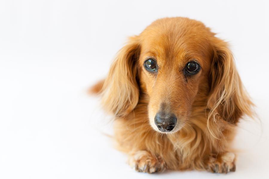 2020年「犬の名前ランキング」トップ30発表(写真はイメージ)【写真:写真AC】