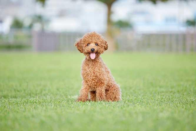 「人気犬種ランキング2021」トップ30が発表された