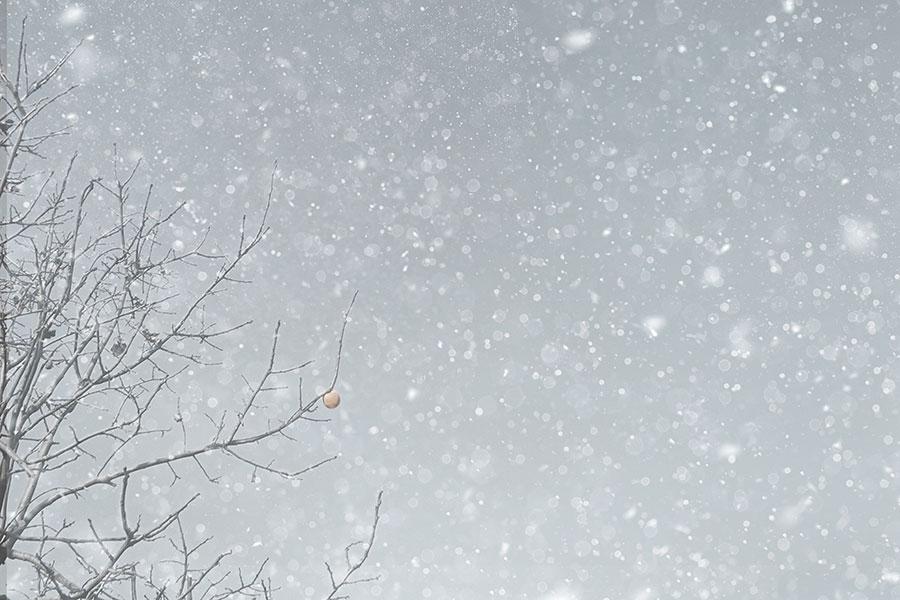 「大粒の雪」「めちゃ雪」トレンド入り(写真はイメージ)【写真:写真AC】