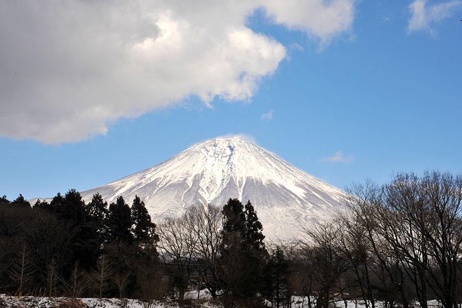 富士山麓の青木ヶ原樹海のイメージアップ動画が公開された【写真:写真AC】