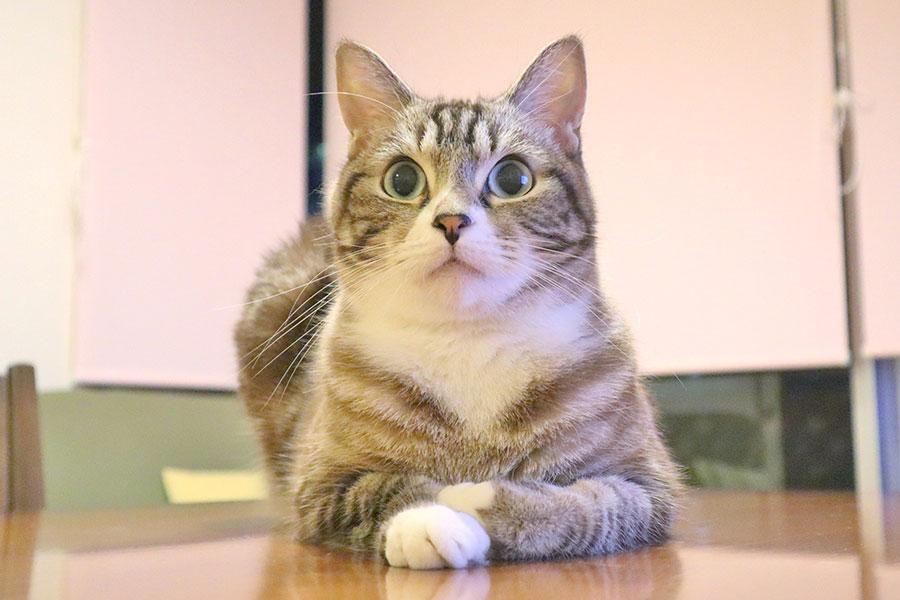 「好きな猫のキャラクター」ランキング1位は? 全年代の女性に人気、30代男性も支持
