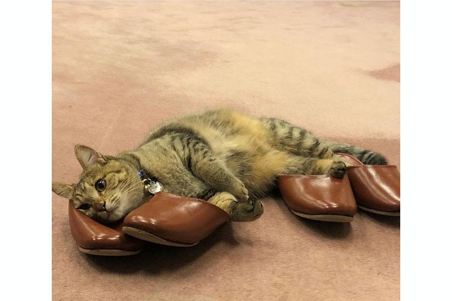 これは癒やされる! 2月22日は猫の日「会いたくなる宿の看板ネコ」ベスト5発表