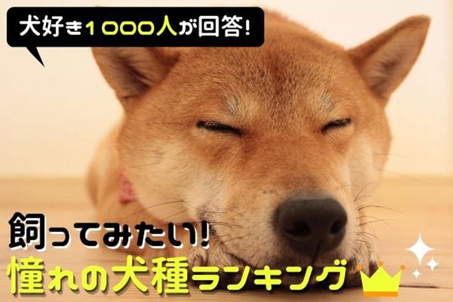「飼ってみたい憧れの犬種」人気ランキング