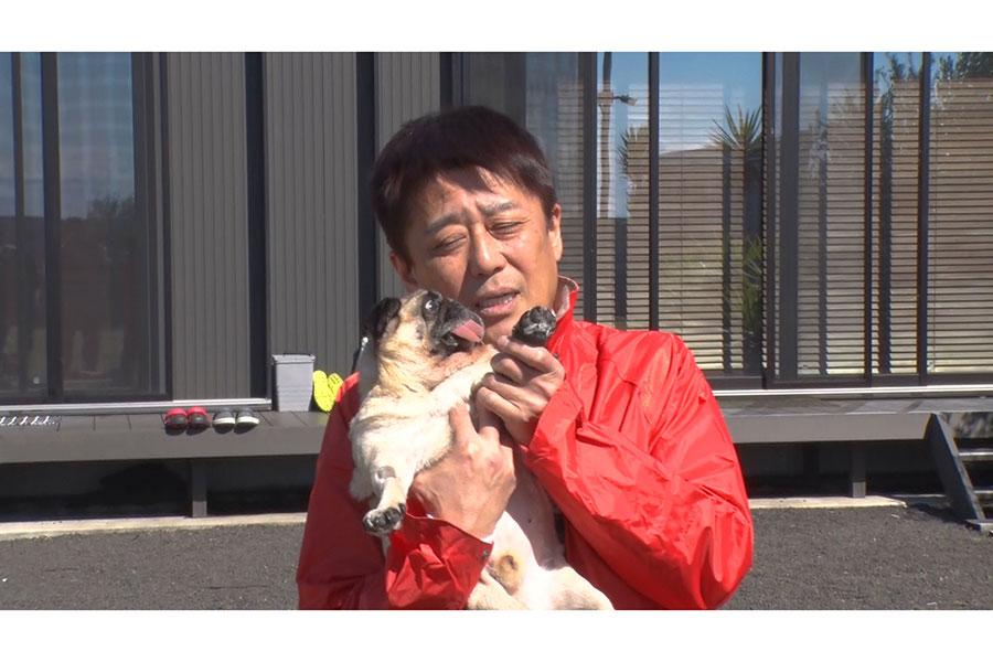 坂上忍、犬14匹&猫4匹の生活に密着【写真:(C)フジテレビ】