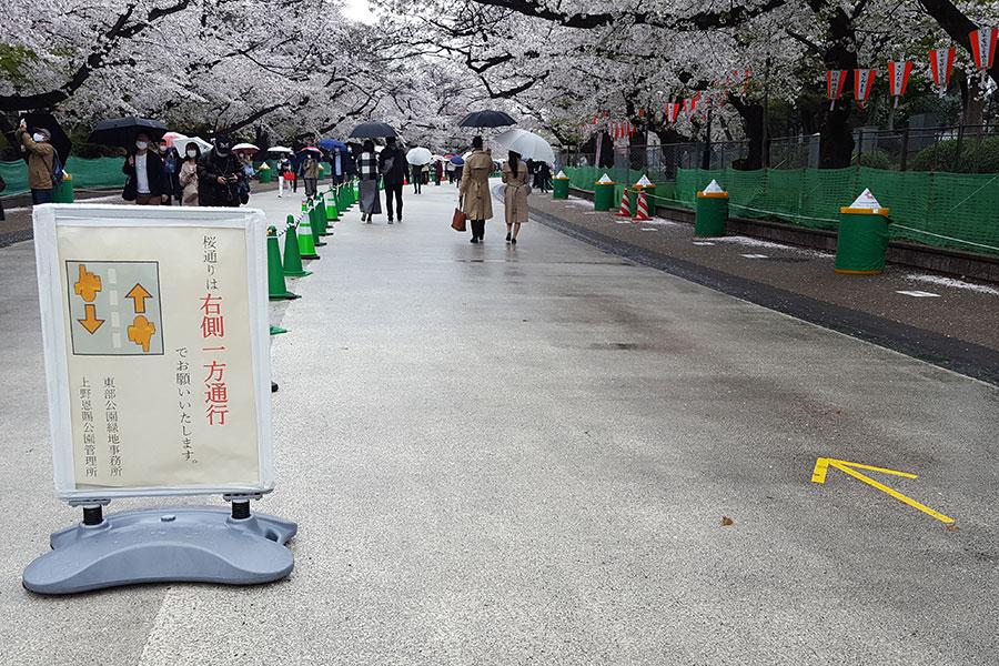 28日昼間の上野公園桜通り。宴会をしている若者グル―プはまったく見かけない 【写真:ENCOUNT編集部】