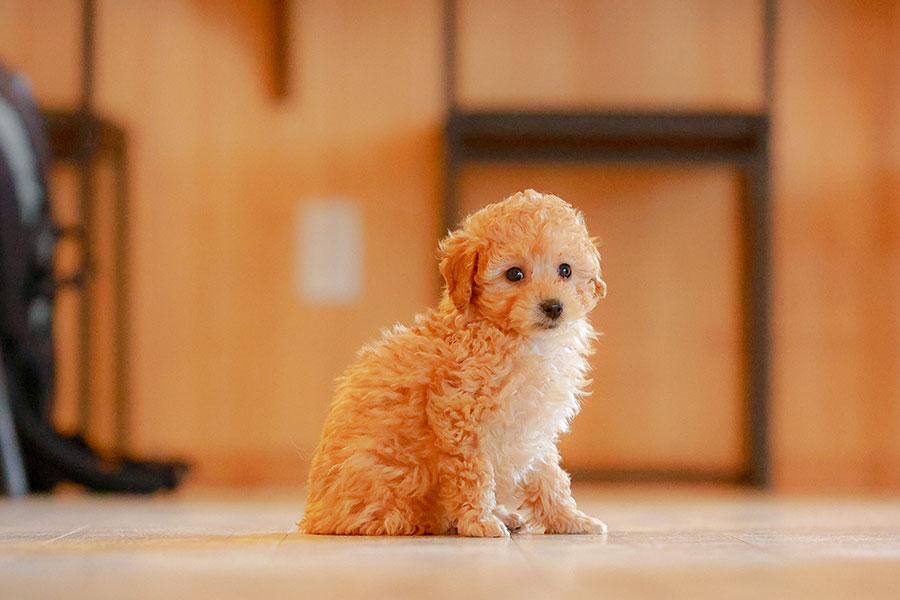 犬の住居事情に関するアンケートが実施された【写真:写真AC】