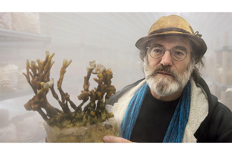 きのこ・菌類に迫ったドキュメンタリー映画、予告編が完成 米で高評価の注目作